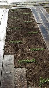 庭はご主人様のご希望で、庭木を沢山植えて欲しいとのこと。