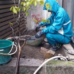そして、和室前の坪庭で水鉢をどのように配置すればかっこよく見えるか、試案中で固まっていましたね。