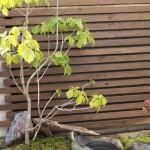 和室から見える坪庭。 これは庭師さんが、水鉢の角度にこだわって完成した素敵な庭です。